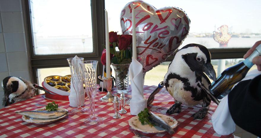 pinguinos San Valentin 3