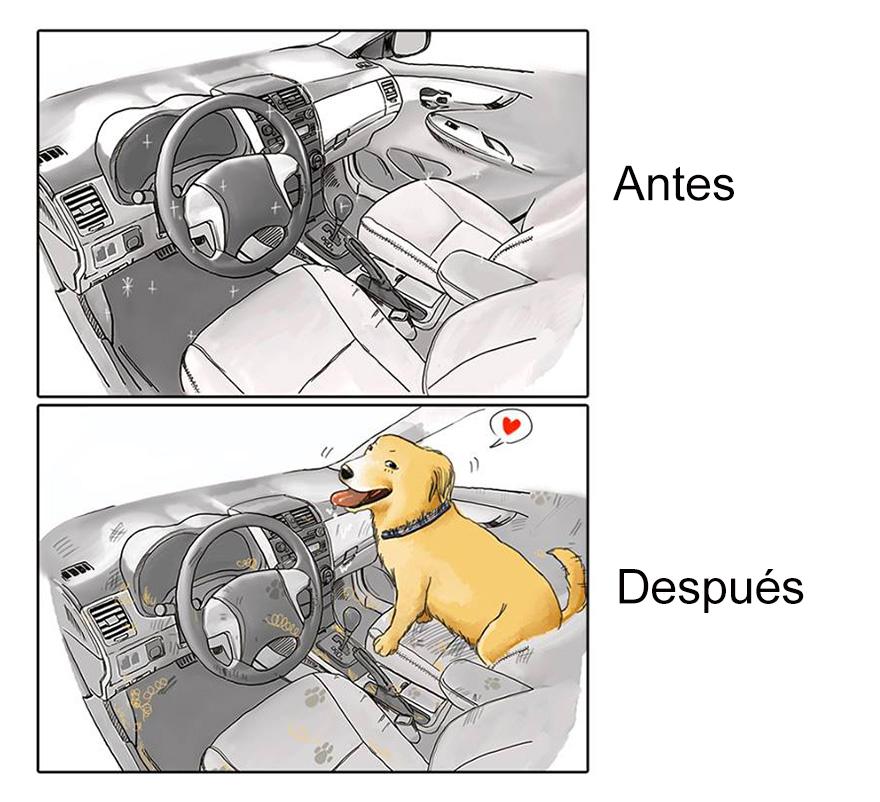 vida antes y despues tener perro 7