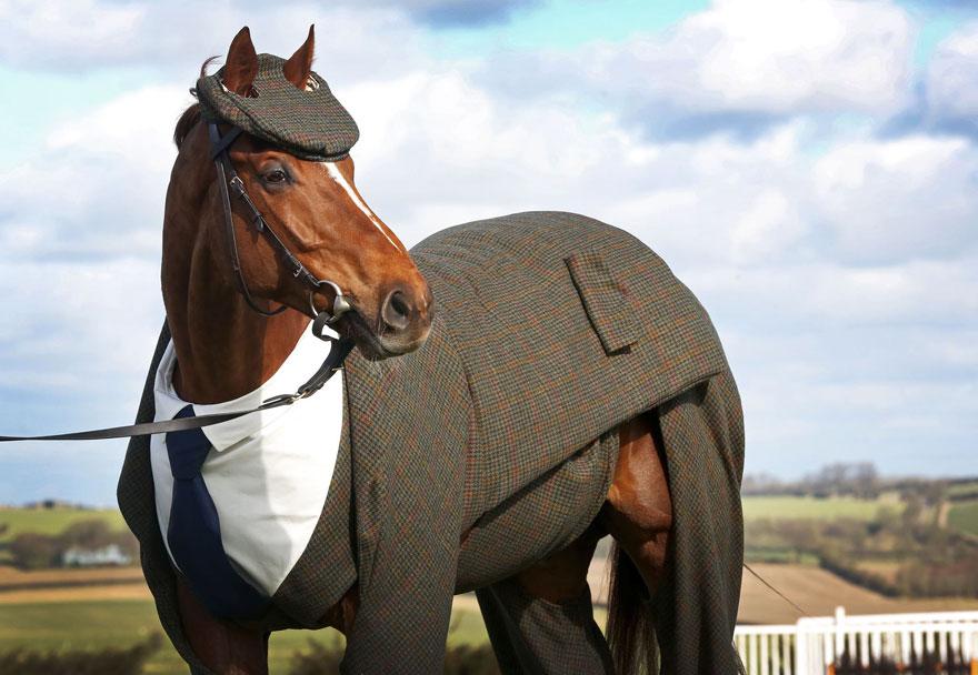 caballo con traje 1