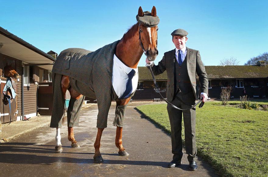 caballo con traje 4