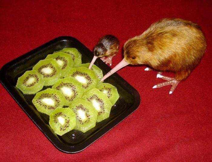 kiwis canibales