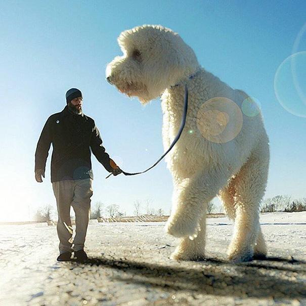 photoshop perro gigante 12