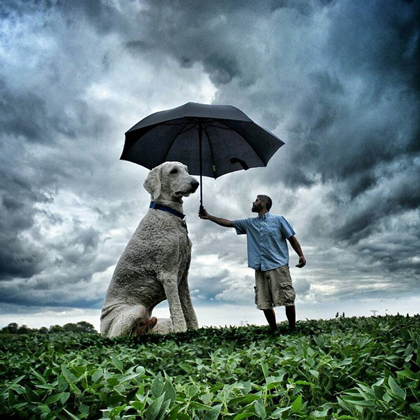 photoshop perro gigante 13