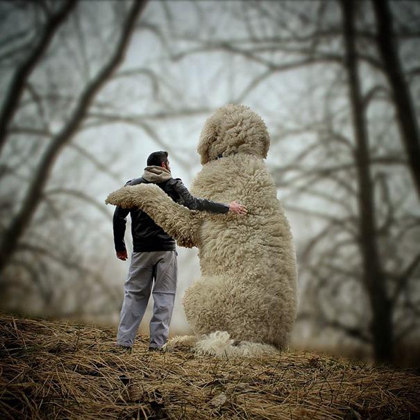 photoshop perro gigante 14