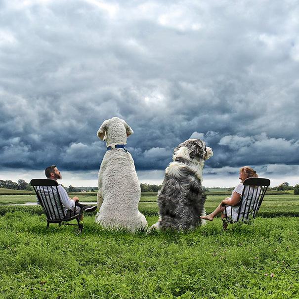 photoshop perro gigante 17