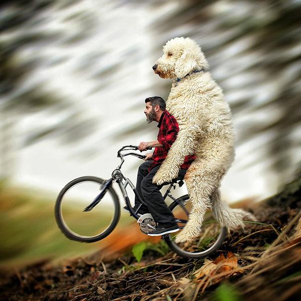 photoshop perro gigante 7