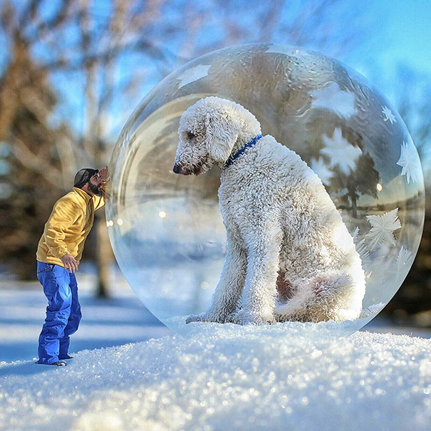 photoshop perro gigante 8