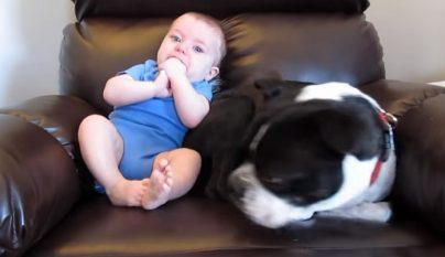 bebe y su perro
