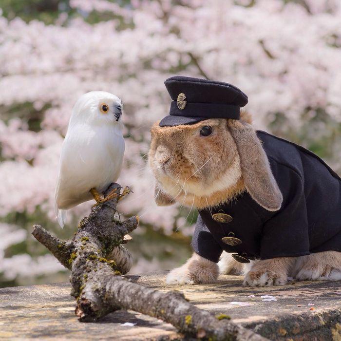 conejo PuiPui 2