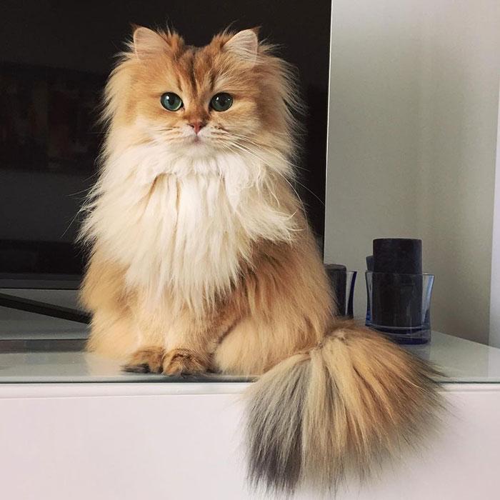 el gato más bonito del mundo 1