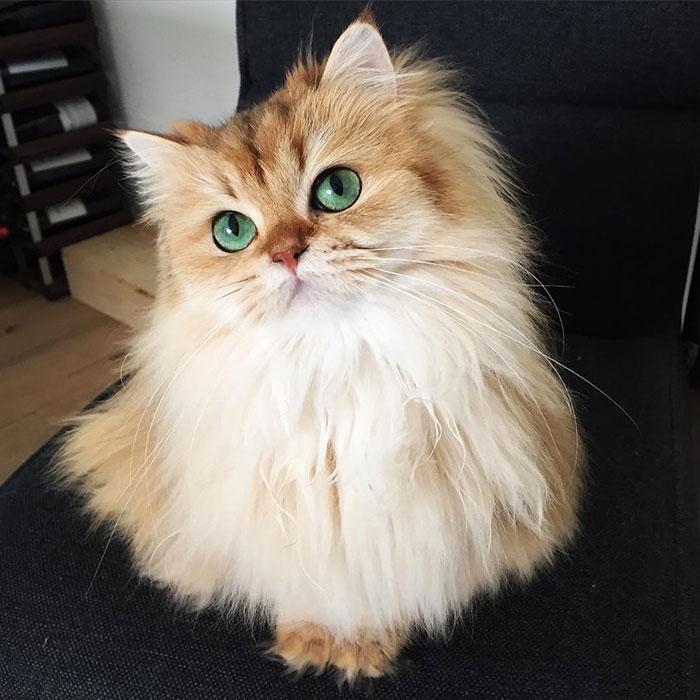 el gato más bonito del mundo 2