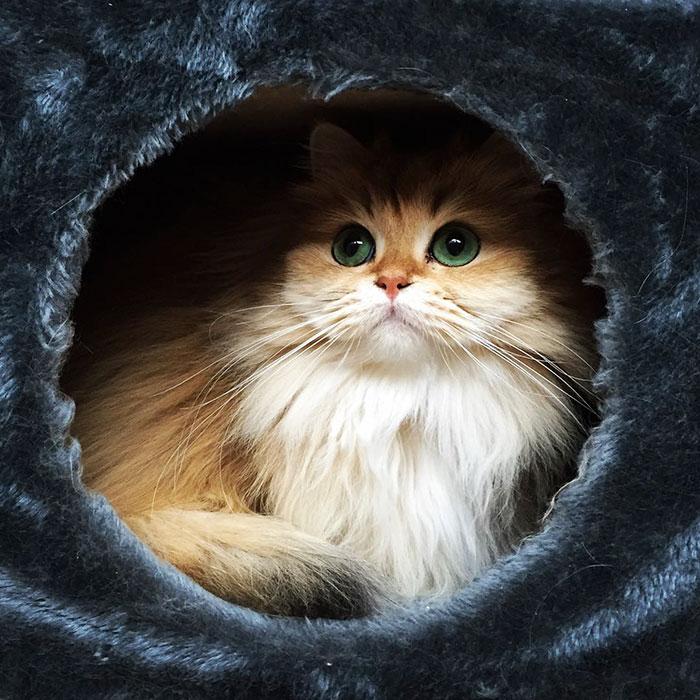 el gato más bonito del mundo 3