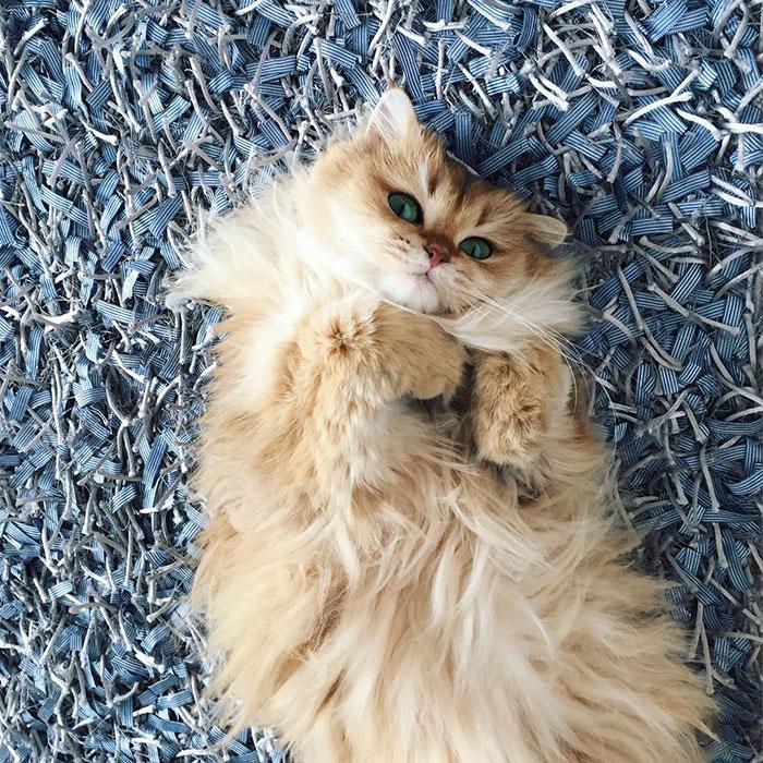 el gato más bonito del mundo 4