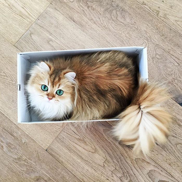el gato más bonito del mundo 5