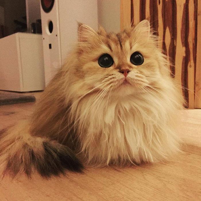 el gato más bonito del mundo 6