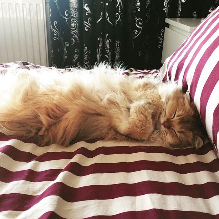 el gato más bonito del mundo 8