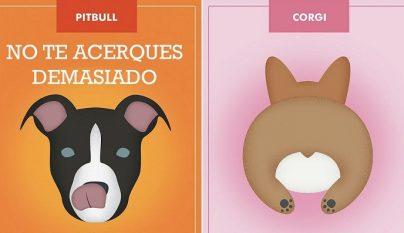esloganes perros 1