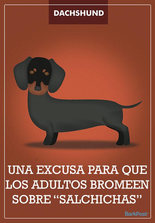 esloganes perros 10