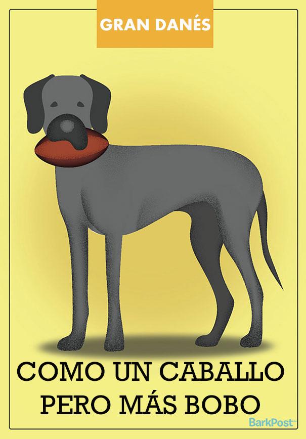 esloganes perros 9
