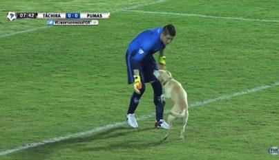 perro Tachira Pumas