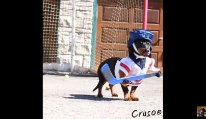 perro salchicha disfrazado