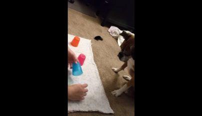 perro trilero