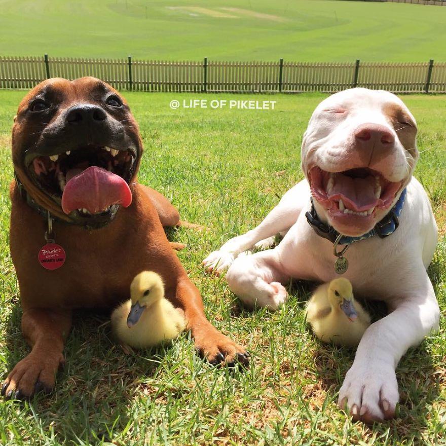 perros graciosos 1