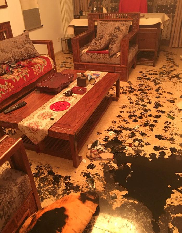 piso sucio perro 3