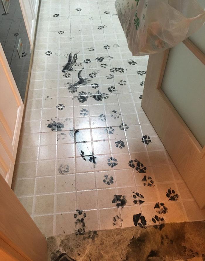piso sucio perro 6