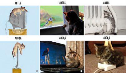 vida de los gatos tecnologia 1