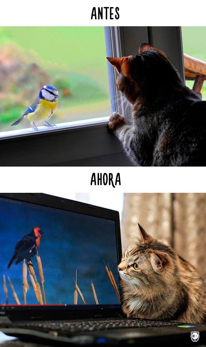 vida de los gatos tecnologia 2