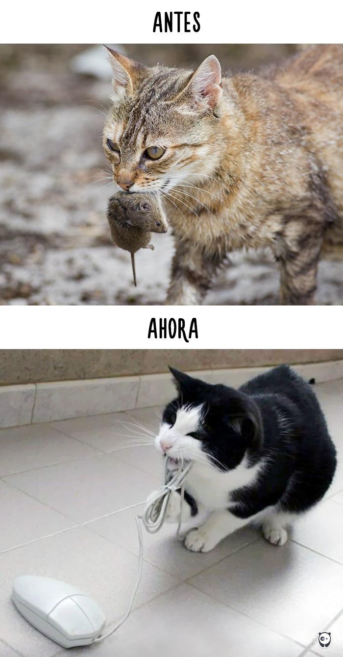 vida de los gatos tecnologia 4
