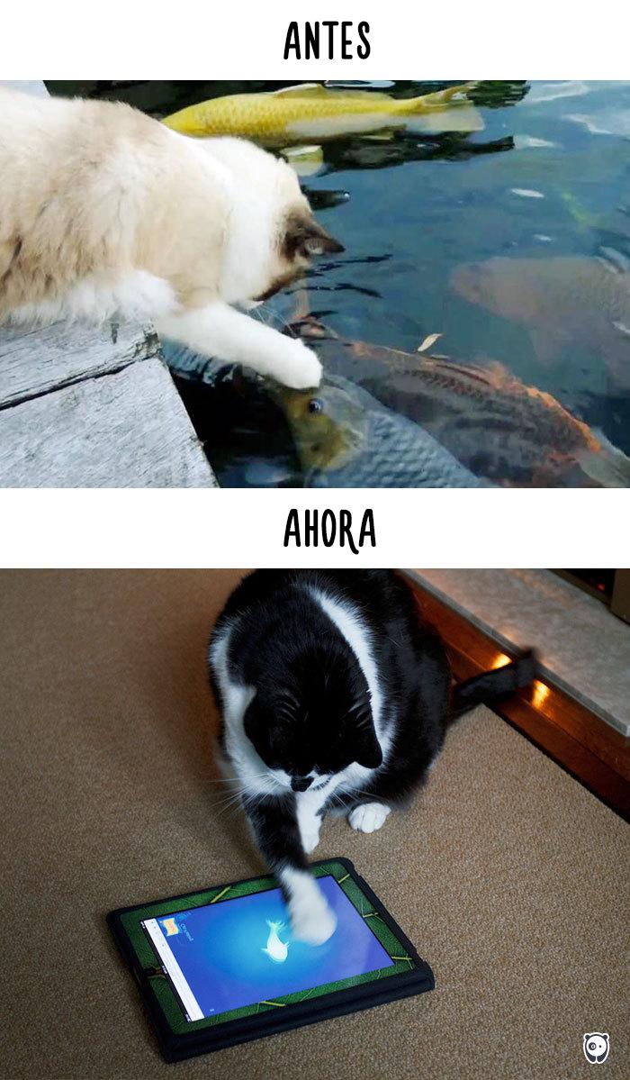 vida de los gatos tecnologia 5