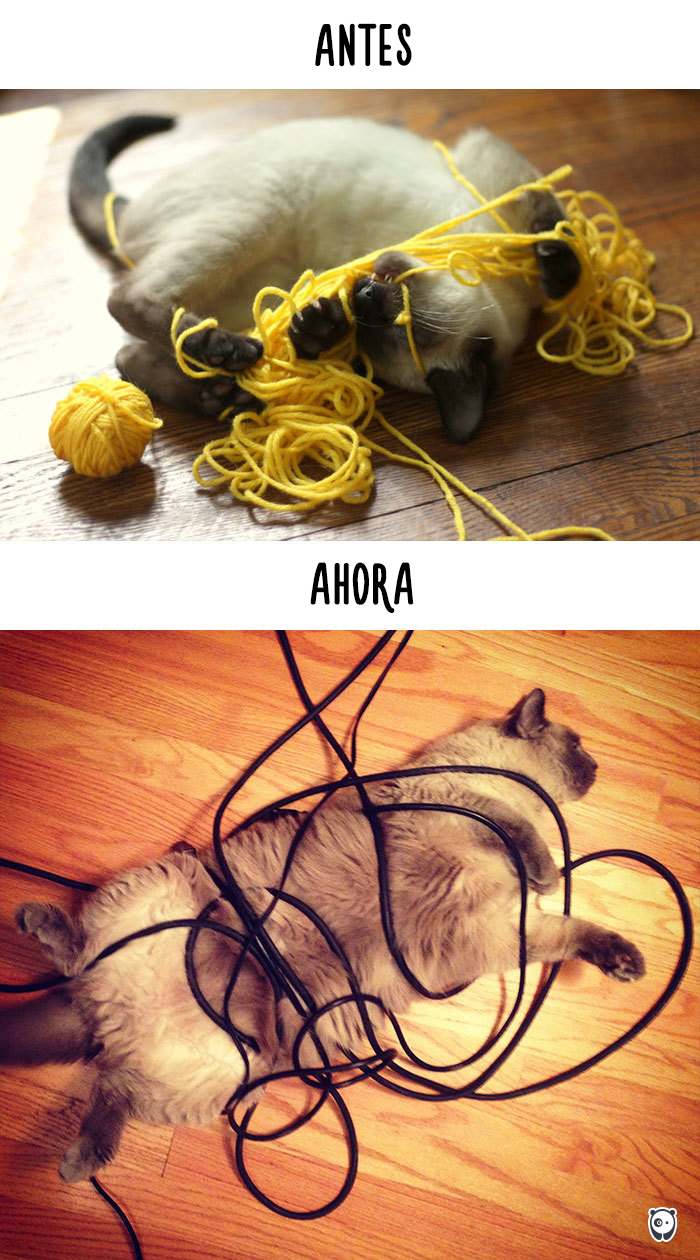 vida de los gatos tecnologia 6