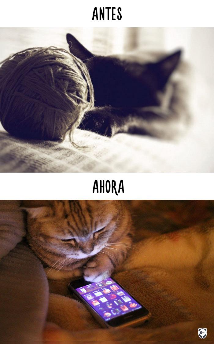 vida de los gatos tecnologia 8