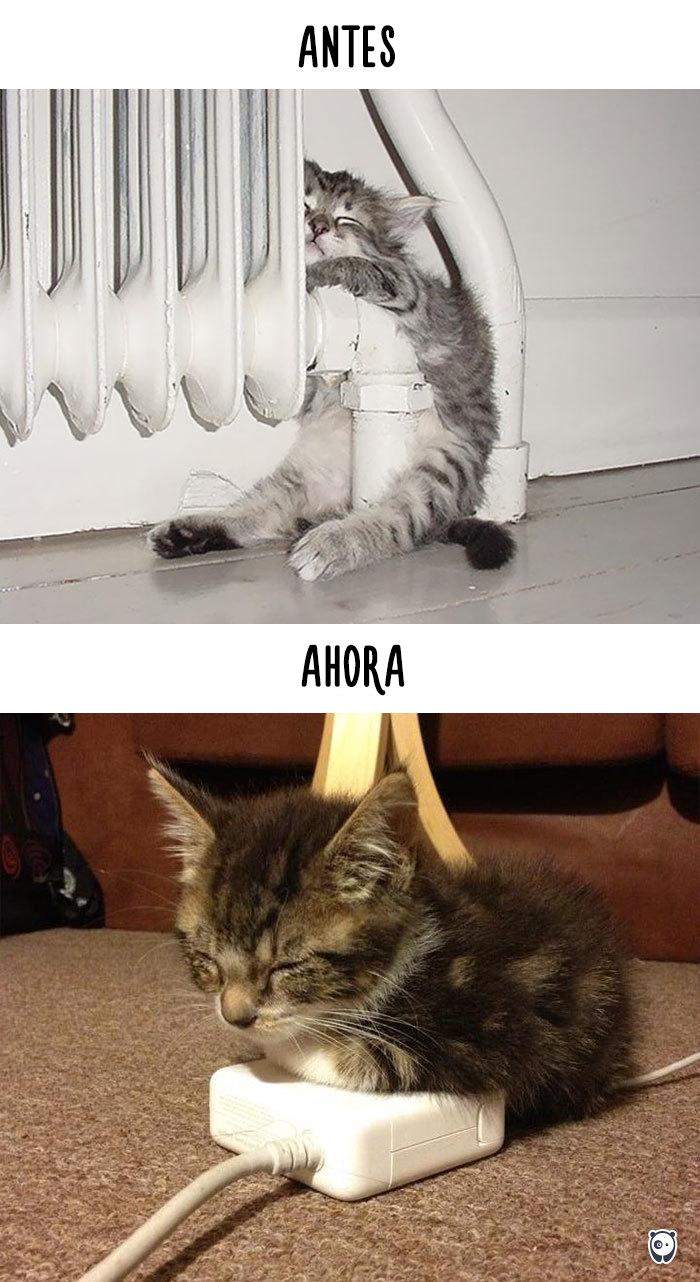 vida de los gatos tecnologia 9