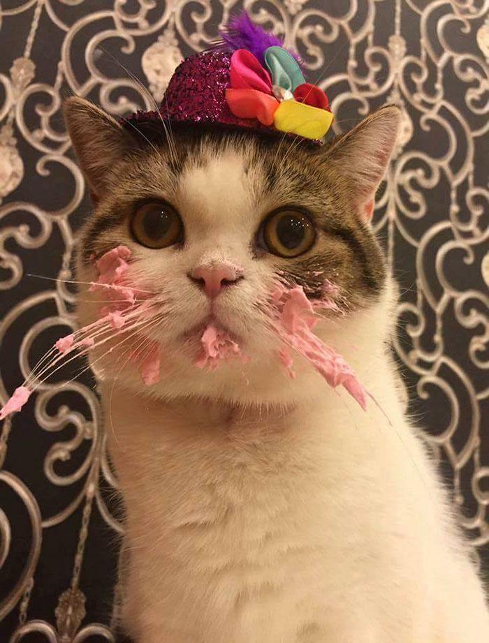 gato pastel 4