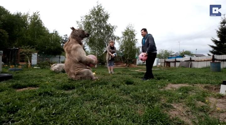 vivir oso