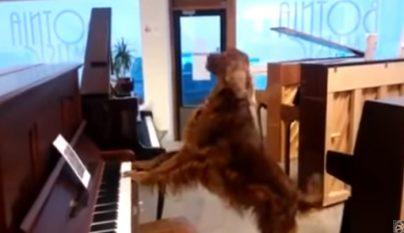 perro tocando el piano