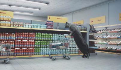 gato comprando