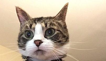 gato portatil