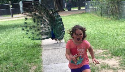 nina perseguida pavo real 1