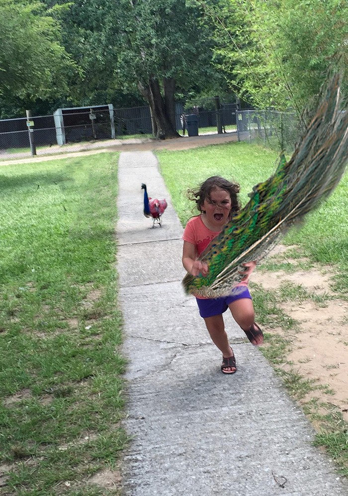 nina perseguida pavo real 9