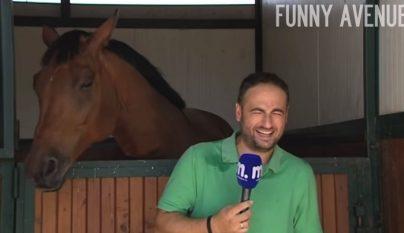 reportero caballo