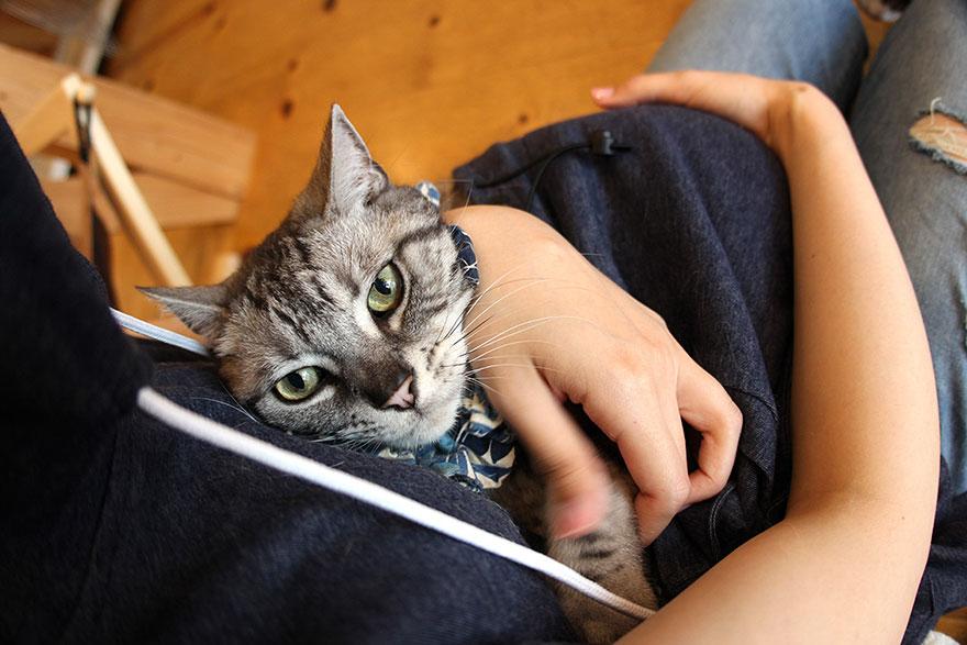 sudadera Unihabitat para gatos 2