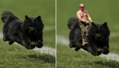 Photoshop gato partido rugby 1