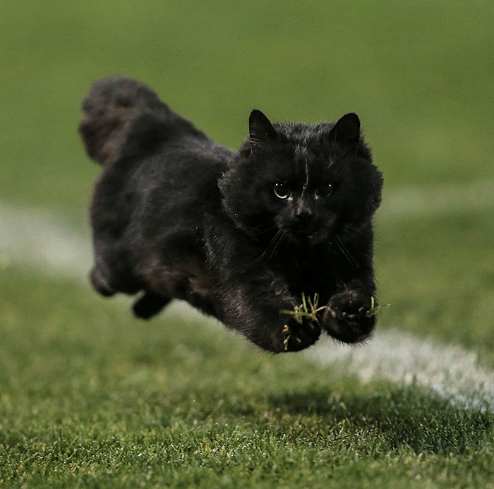 Photoshop gato partido rugby 1