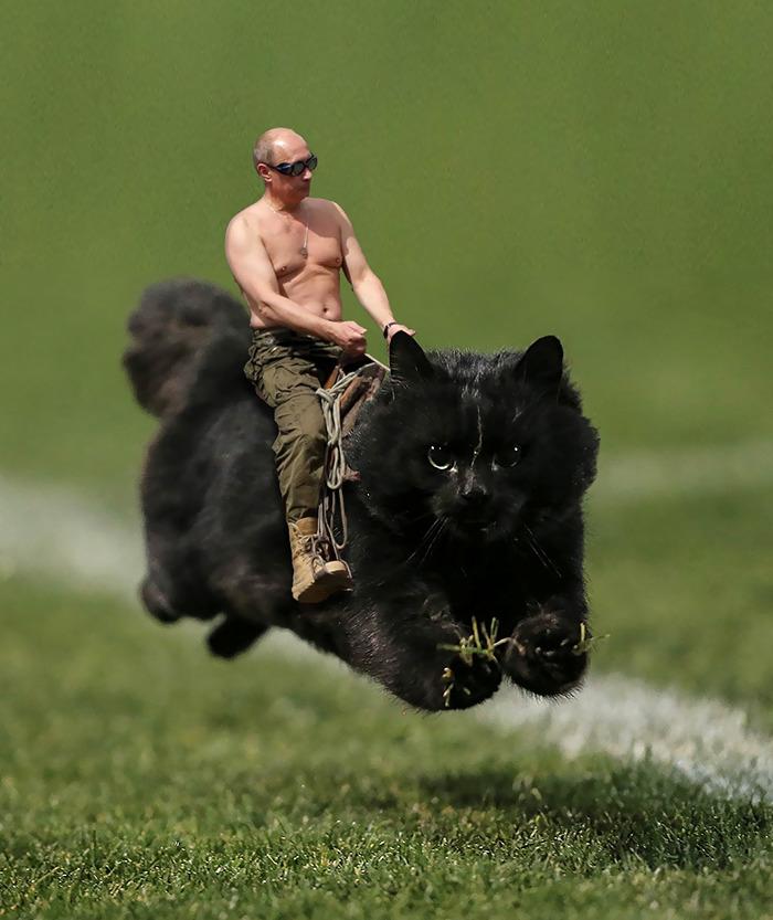 Photoshop gato partido rugby 2