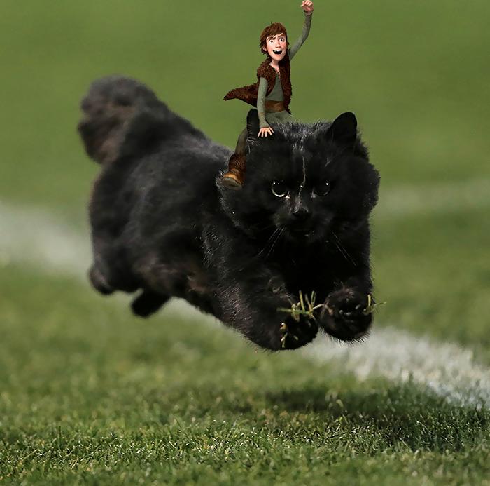 Photoshop gato partido rugby 4