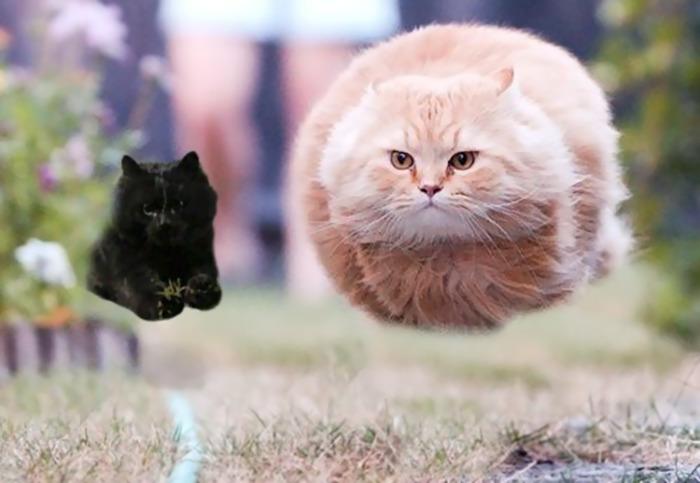 Photoshop gato partido rugby 6